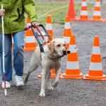 Ledarhund med förare på hinderbana