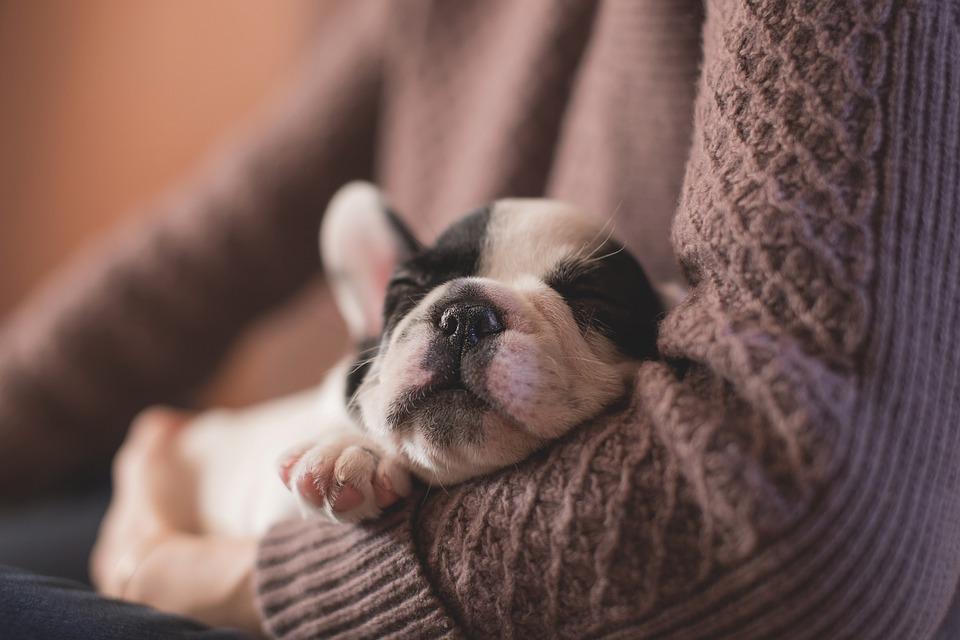 Hundar och sömn